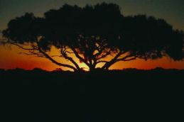 Christian Depression-Tree at sunset