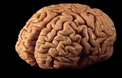 Your Beautiful Brain